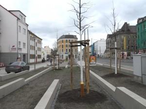 Baumpatenschaft am Möckernschen Markt