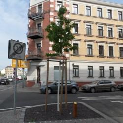 Patenbaum