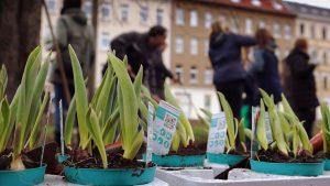 Blumenpflanzung im Rahmen der Aktion Frühjahrsputz auf dem Möckernschen Markt. Foto: Management Möckern in Aktion