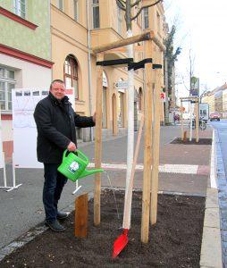 Bäckermeister Andreas Geisler gießt als erster Baumpate im frisch sanierten Straßenabschnitt Linkelstraße - Viadukt auf der Georg-Schumann-Straße einen seiner Patenbäume an.