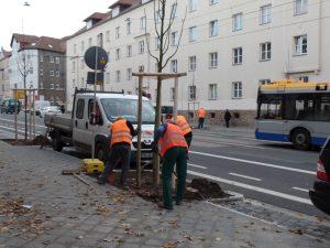 43 Stadtlinden wurden im November 2017 auf der Georg-Schumann-Straße neu angepflanzt.