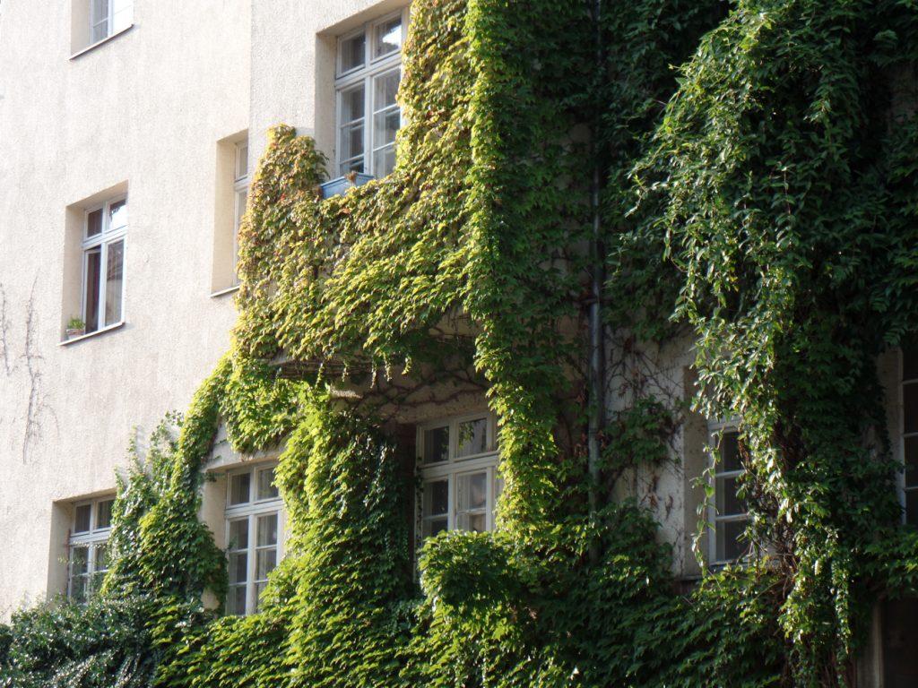 Begrünte Fassade in Leipzig Gohlis. © Magistralenmanagement Georg-Schumann-Straße / Stephan Grandke