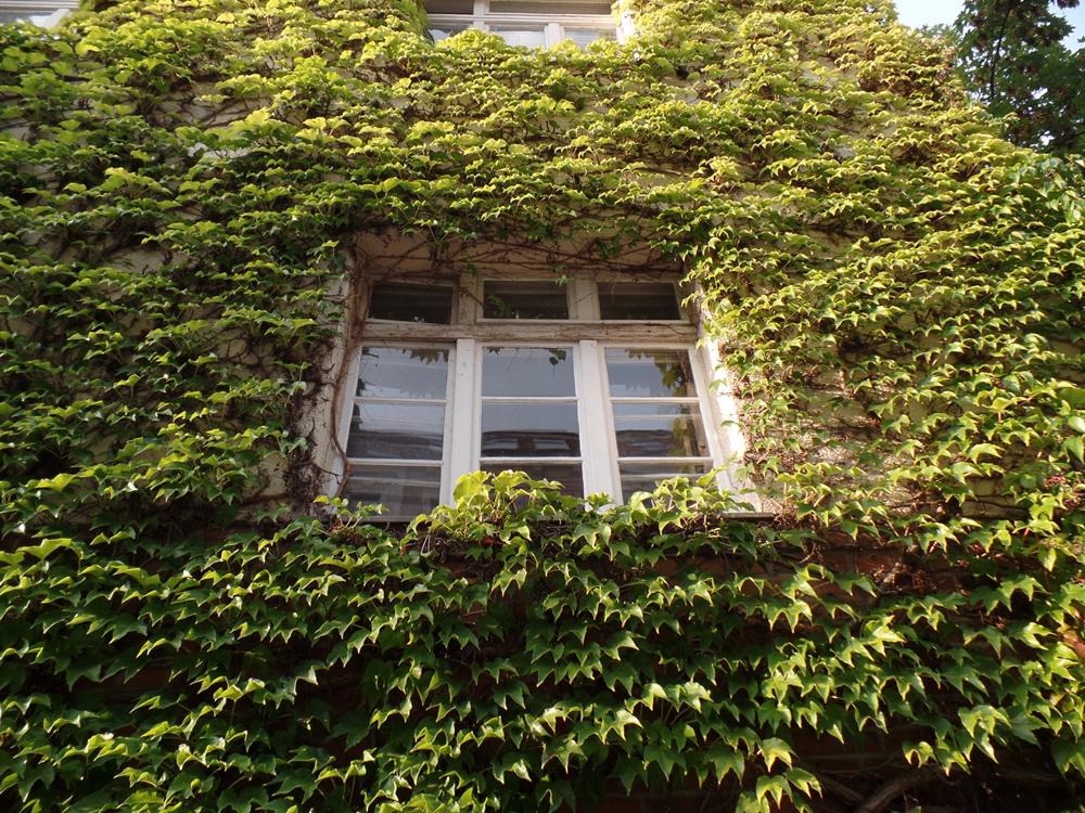 Grüne Fassade in Leipzig Gohlis. © Magistralenmanagement Georg-Schumann-Straße / Stephan Grandke